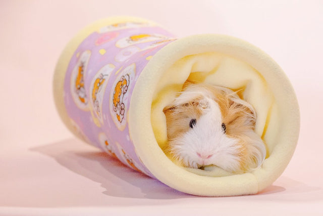 Donut Tunnel Guinea Pig Bed