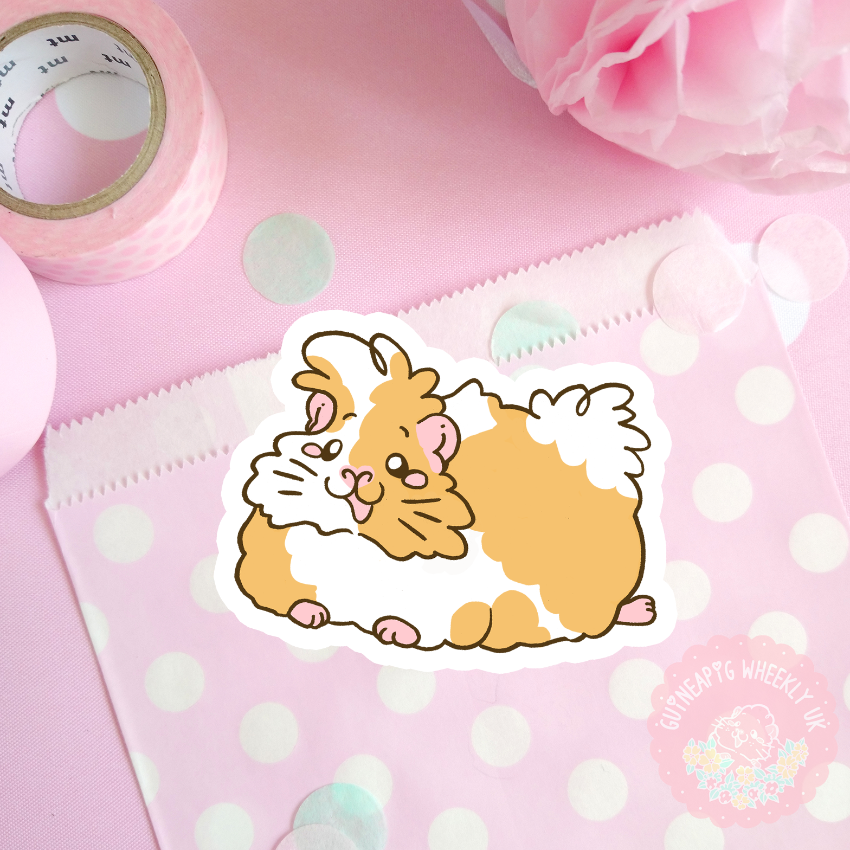 Peruvian Guinea Pig Decal  Vinyl Sticker