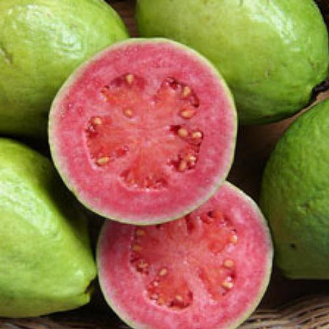 guava pink