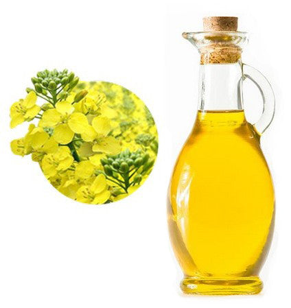 The Beauty Of Camelina Seed Oil Super Oil – Ayelet Naturals