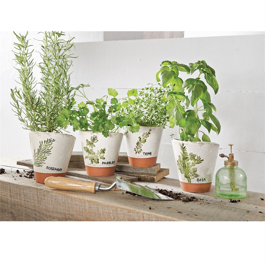Get your Herb Garden Started
