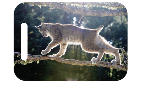 Candian Lynx on a branch on a ID tag. Personalize your backpack or luggage with a wildlife photo!