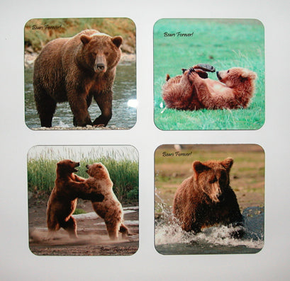 Set of 4 photographic coasters with cork backs. Brown bear is various poses