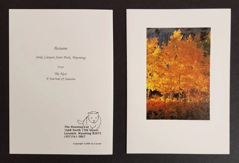 Autumn Fall Aspen Trees in Sinks Canyon, WY, greeting cards. Blank inside, pack of 4 with envelopes