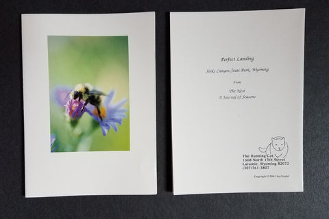 "Pollinator, bumble bee on a white daisy, photo 5""x7"" photo greeting cards with envelopes, blank inside"