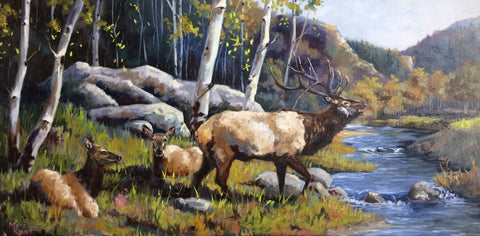 a bull elk bugling with two cows laying next to a creek and an Aspen grove