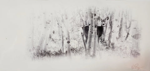 Mule Deer Doe alert in an aspen grove. Soft Touch Post Card with envelope