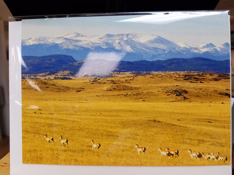 RL-172-C15 Pronghorn Base of Mountain Fall Card