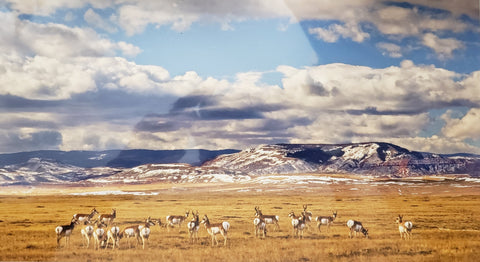 SLD-30-20020 Red Mountain Pronghorn- 13 x 8 print Cotton rag paper