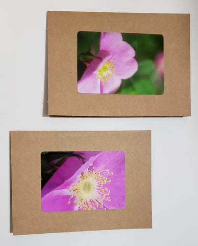 Wyoming Wild Rose (Pink) Greeting Card Pack