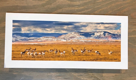 Pronghorn And Red Mountain Print