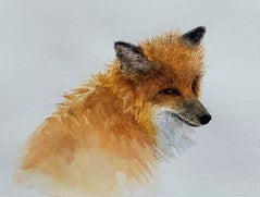 Red Fox Fine Art Print from Watercolor 7 x 9""