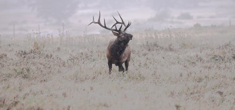 Winter is Coming, photograph of Wyoming Bull Elk Bugeling by Photographer Jason Sondgeroth