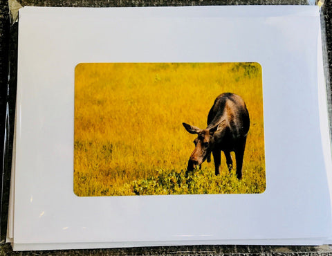 Wyoming wildlife Images of cow moose,, elk, mountain goat, bison, phronghorn