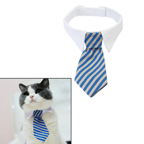 Pet Neck Tie & White Collar