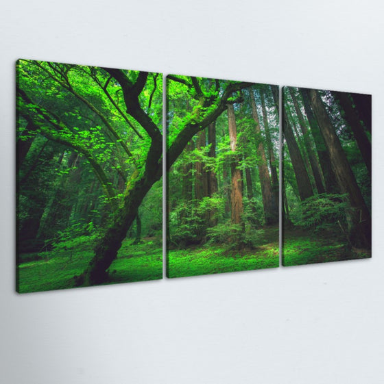 Lush Forest 3 Piece Canvas
