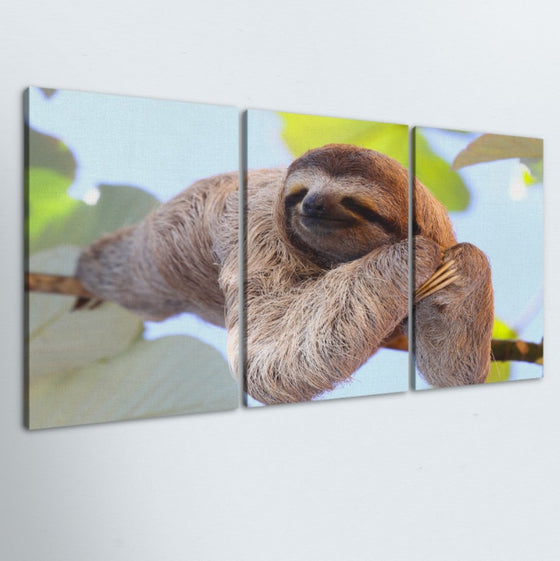 Sloth 3 Piece Canvas