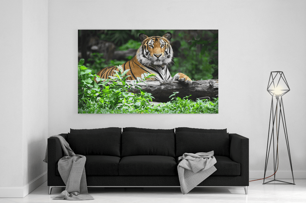 Majestic Tiger Single Canvas
