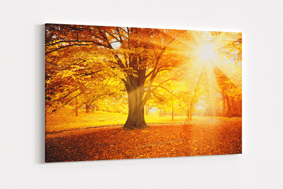 Autumn Morning Single Canvas