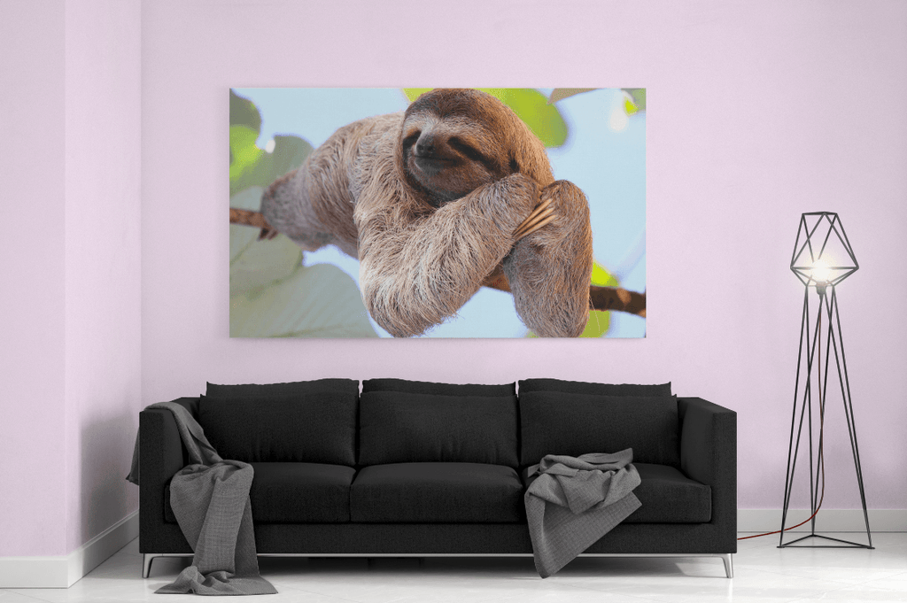 Sloth Single Canvas