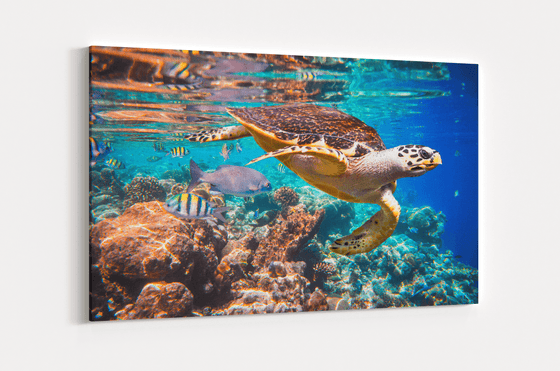 Sea Turtle Single Canvas