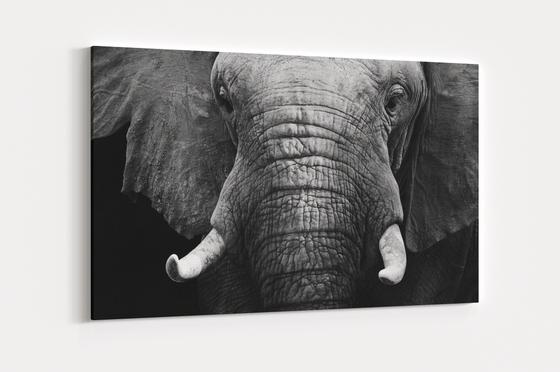 Elephant Portrait Single Canvas