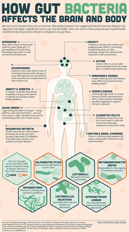 How Gut Bacteria Affects Your Health