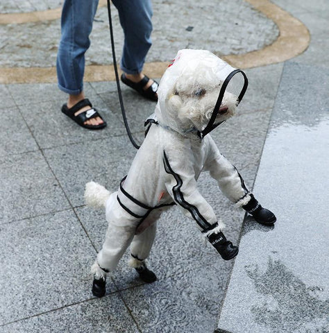 Clear Waterproof Raincoat for Pet Dogs