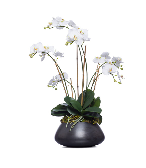 White Orchid In Black Bowl