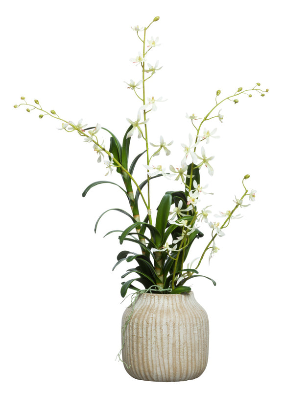 Cream Vanda In Small Wood Pot