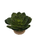 LARGE ECHEVERIA IN SM WOOD BOWL