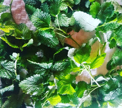Powerful Lemon Balm!