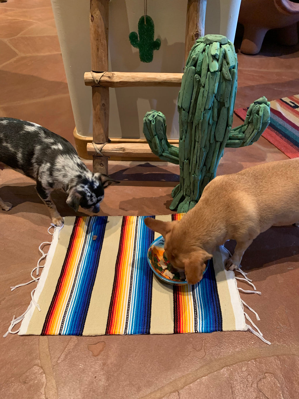 Beige serape doggy/ kitty placemat