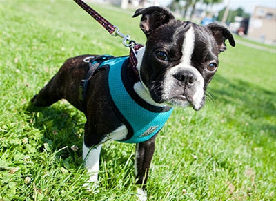 Cirque Soft Walking Harness