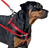 Freedom No-Pull Harness Package