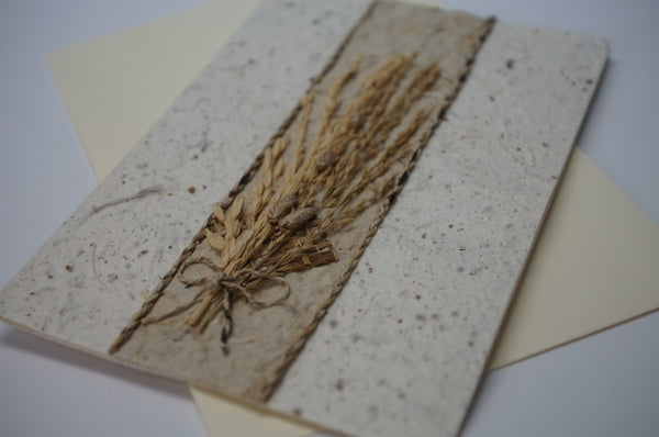 Wheat Center Dried Flower Close Up