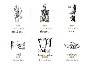 CARDLOVER Wooden Stamp Hand Bone, Skeleton, Spine, Skull, Bone Structure