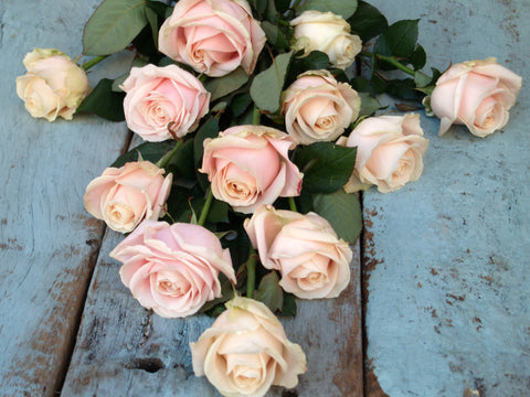 The Best Long Stemmed Pink Roses