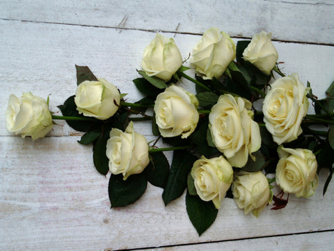 Valentines Day Best Long Stemmed White Roses