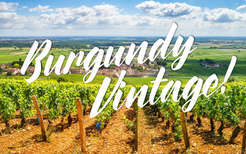 What is Burgundy Wine? My 2019 Burgundy Vintage