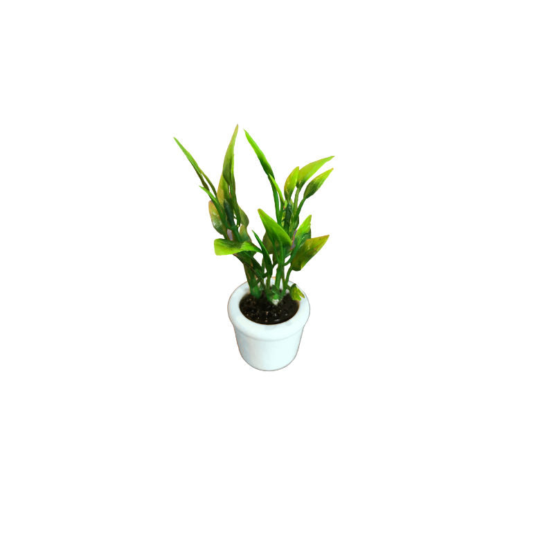 Potted House Plant