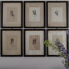 Victorian Framed Portrait Prints of the Grillions Club - architectural-forum