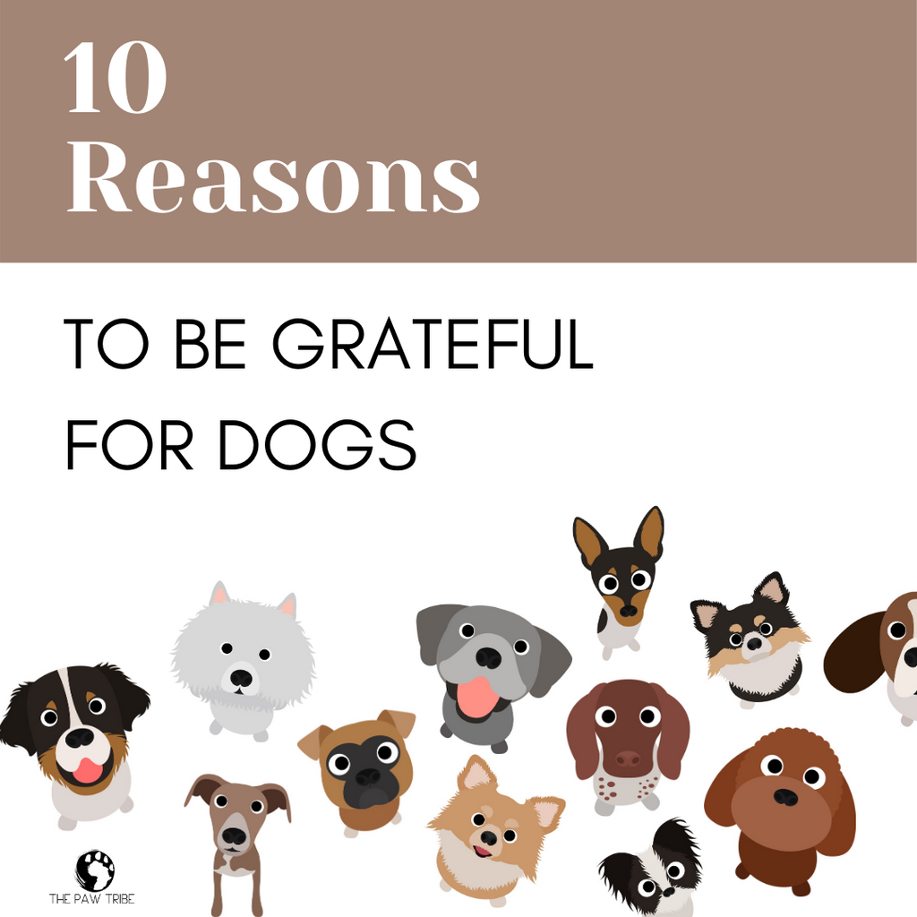 10 Reasons Why We're Thankful for Dogs!