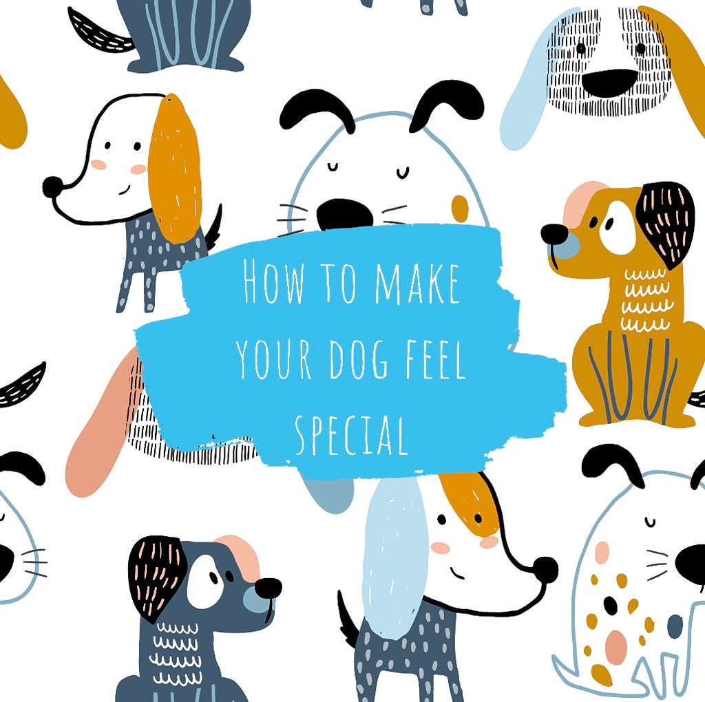 7 Ways to Make Your Dog Feel Special  | Pet Appreciation Week