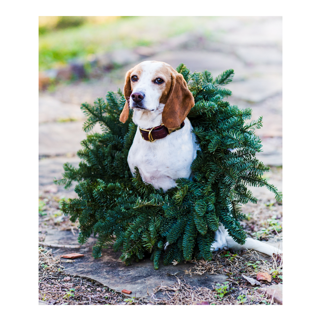 Dog Safety During the Holidays