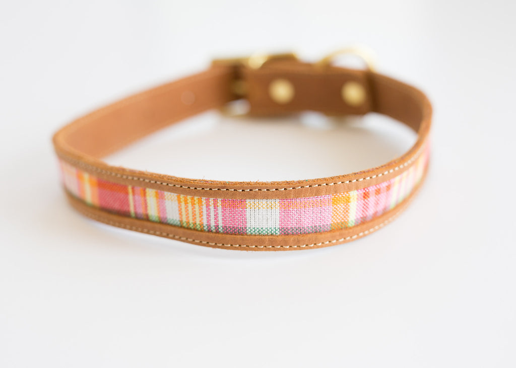 LEGALLY BLONDE COLLAR