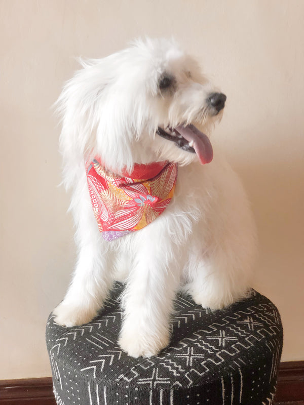 PINEAPPLE SORBET REVERSIBLE TRIANGLE DOG BANDANA