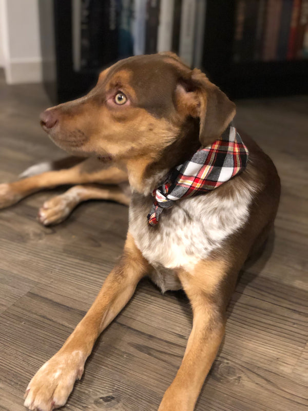 SMOKY S'MORE DOG BANDANA