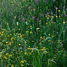 Heavy Soils Wildflower & Grass Seed Mix 80:20