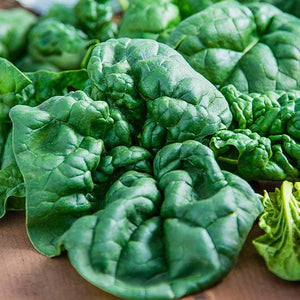 Spinach Bloomsdale • سبانخ كبير - plantnmore